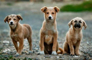 Puppy training bij de Hondenschool